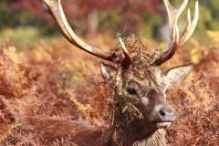 deer-in-disquise-6b517b086cc80923b9fd31d36245ebd2d488f2d9