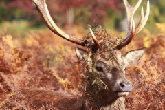 deer-in-disquise-bf997bb3cd214f564df23bf62493a219b0746ec0